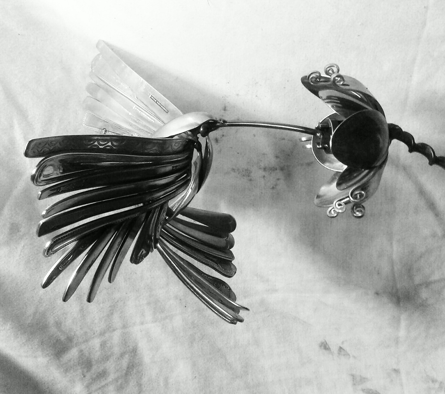 humming bird jason heppenstall
